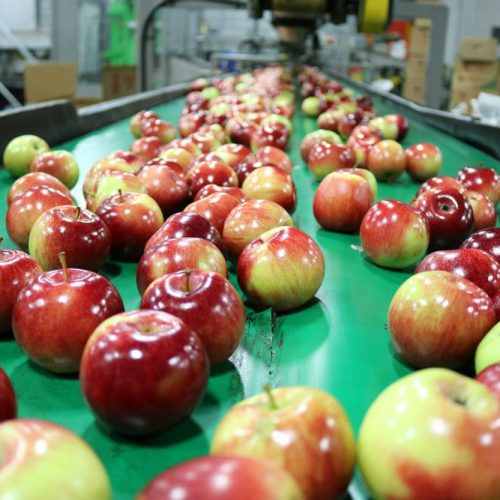 Packline Apples
